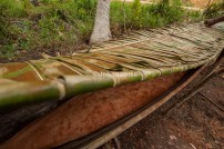 Kole-kole is a tradisional canoe from Papua. Kole-kole usually uses on process making Sago as